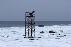 Zaniechany żołnierza piechoty morskiej wierza na śniegu w seashore Fotografia Stock
