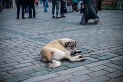 Zaniechany bezdomny przybłąkany pies kłaść na kwadracie w dużym mieście obraz stock