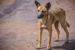 Zaniechany, bezdomny przybłąkany pies, stoi w ulicie Litt Obraz Stock