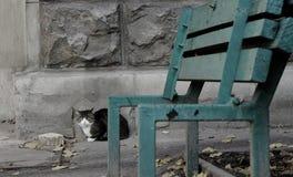 Zaniechany biedny kot przeciw popielatej betonowej ścianie z unfocused łamającą ławką przedpolem Zdjęcia Stock