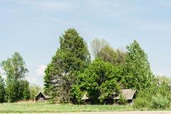 Zaniechany dom na wiosce ciężko przerasta z drzewami Obraz Stock