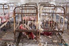 Zaniechany dzieciniec w Chernobyl niedopuszczenia strefie Przegrane zabawki, A ?amaj?ca lala Atmosfera strach i samotno?? Ukraina zdjęcia stock