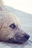zaniechany pies Zdjęcie Stock