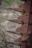Zaniechany Sawtooth wyposażenie Fotografia Stock