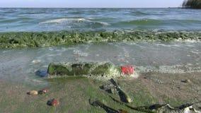 Zanieczyszczać morze zatoki zielone fala z algami i butelką zbiory wideo