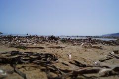 Zanieczyszczająca plaża Zdjęcie Stock