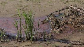 Zanieczyszczający brzeg rzeki katastrofa ekologiczna zbiory
