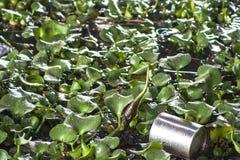 Zanieczyszczenia Pinheiros rzeka Obraz Royalty Free