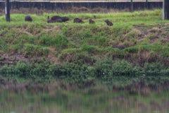 Zanieczyszczenia Pinheiros rzeka Zdjęcia Royalty Free