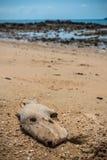 Zanieczyszczenie Środowiska na plaży w Tajlandia Zdjęcia Stock