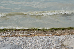 Zanieczyszczenie jezioro z algami Obraz Royalty Free