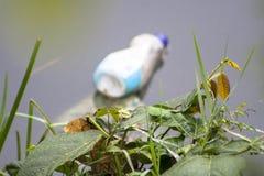 Zanieczyszczenie Pinheiros rzeka w Sao Paulo Obrazy Stock