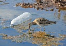 Zanieczyszczenie vs natura Obraz Royalty Free