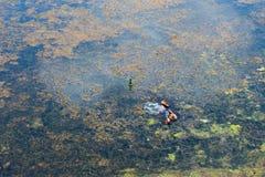zanieczyszczenie zielona nutowa woda Zdjęcia Royalty Free