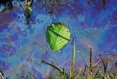 Zanieczyszczona woda z pływackim liściem Obraz Royalty Free