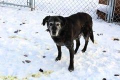 Zaniedbany pies otaczający kaku w podwórko fotografia royalty free