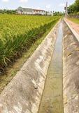 Zanja de irrigación del campo del arroz Imagenes de archivo