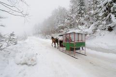 zanka саней 2 лошади Стоковые Изображения RF