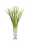 Zantedeschia-Blume im Glasvase Stockfoto