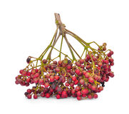 Zanthoxylum piperitum del pepe di Szechuan, frutti isolati su briciolo Fotografia Stock Libera da Diritti