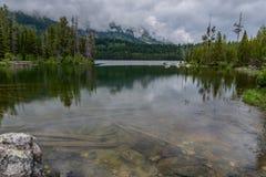 Zanurzający drzewa Pod Gładką wodą obrazy stock