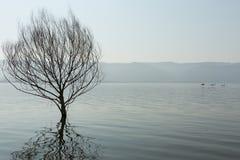 Zanurzający drzewo zdjęcie royalty free