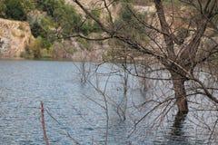 Zanurzający drzewo obraz stock