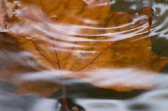 Zanurzający liść obraz stock