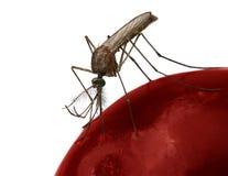 Zanzara Immagine Stock Libera da Diritti