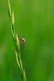 Zanzara di riposo immagine stock libera da diritti