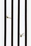 Zanzara morta dall'uccisore della zanzara Fotografia Stock