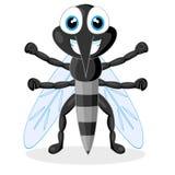 Zanzara sveglia Immagine Stock Libera da Diritti