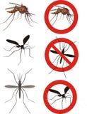 Zanzare Fotografie Stock Libere da Diritti