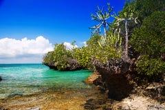 Zanzibar royalty-vrije stock fotografie