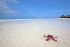 Zanzibar beach Stock Images
