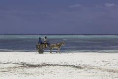 Zanzibar beach. Local people in their small donkey carts on the Matemwe Beach in Zanzibar stock image