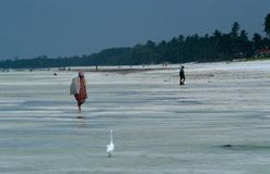 Zanzibar beach during low tide. Royalty Free Stock Photography