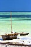 Zanzibar beach  seaweed in indian ocean tanzania     boat Stock Image