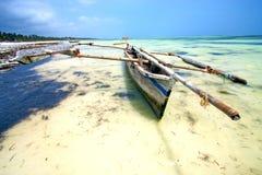 Zanzibar beach  seaweed in indian ocean Royalty Free Stock Images