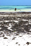 Zanzibar beach  seaweed in indian ocean tanzania    sand isle Stock Photos