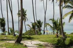 Zanzibar beach vegetation Royalty Free Stock Photo