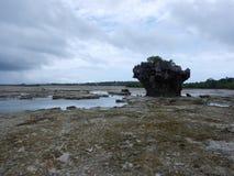 Zanzibar denny brzeg z mangrowe w niskim przypływie Zdjęcie Royalty Free