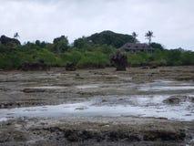 Zanzibar denny brzeg z mangrowe w niskim przypływie Obraz Stock