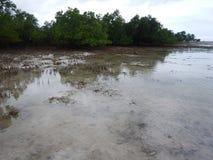 Zanzibar denny brzeg z mangrowe w niskim przypływie Obraz Royalty Free