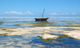 Zanzibar_matemwe beach Royalty Free Stock Photography