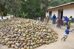 Zanzibar Royalty Free Stock Photo