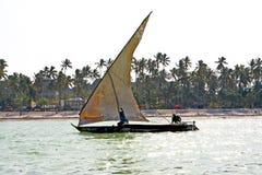 zanzibar seaweed  indian ocean    and sailing Stock Photo
