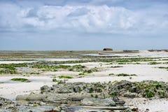 Zanzibar - trópicos - maré baixa Fotos de Stock Royalty Free