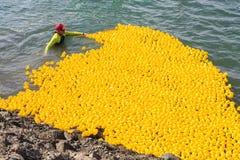 Zaokrąglać w górę tysięcy gumowe kaczki po schronienie rasy fotografia royalty free