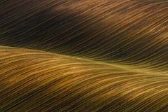 Zaondulowany Kultywujący pole z pięknym cienia chiaroscuro Nieociosany jesień krajobraz w brown brzmieniach Pasiasty pofalowany a obraz stock